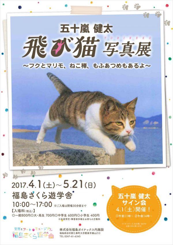 飛び猫.jpg